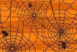 蜘蛛和暴风的故事-一千零一夜故事全集