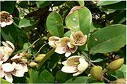 花卉的病蟲害防治 怎樣讓花卉更健康