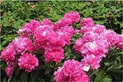 西安最大的花卉市场在哪,最大花卉市场详细介绍