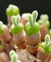 碧光环,小兔子图片欣赏