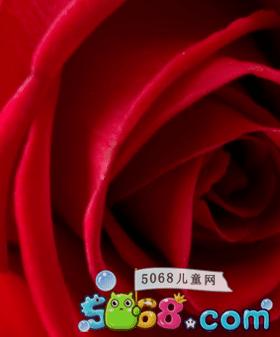 红色玫瑰花图片高清壁纸大图
