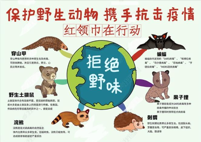 保护野生地球携手抗击疫情红领巾在行动手抄报