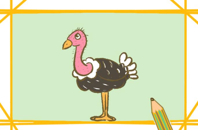 非洲鸵鸟简笔画图片教程