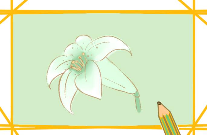 純潔的百合花簡筆畫教程步驟