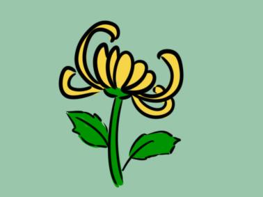 鲜花之菊花简笔画要怎么画