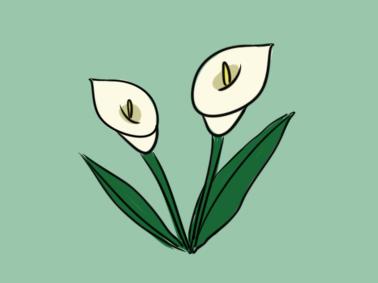 鲜花之马蹄莲简笔画要怎么画