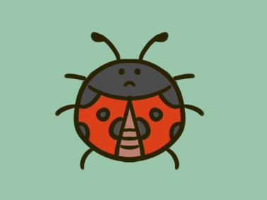 昆虫之七星瓢虫简笔画图片教程