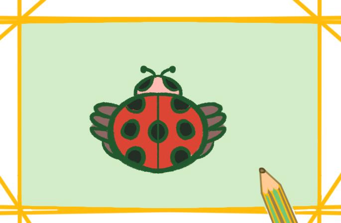 卡通昆虫之七星瓢虫简笔画要怎么画