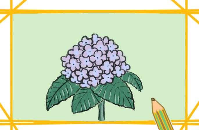 美丽的绣球花儿童简笔画要怎么画