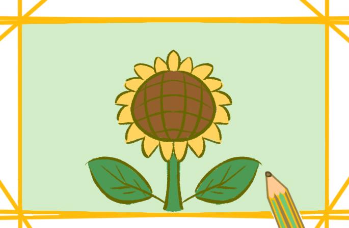 坚强的向日葵简笔画图片教程