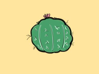 植物之仙人掌球小学生简笔画要怎么画