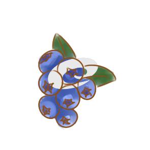 漂亮的蓝莓简笔画要怎么画