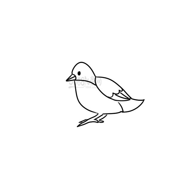 大鸟简笔画手绘过程