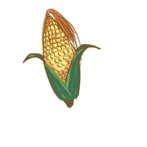 色泽鲜艳的玉米简笔画要怎么画