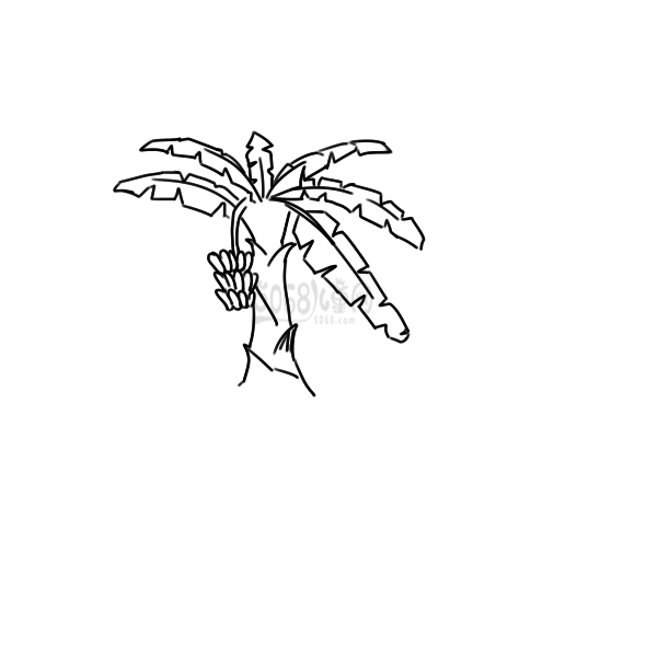 超简单的香蕉树简笔画手绘步骤图